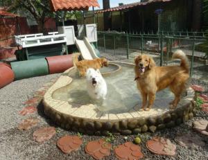 Villa de Perros - Large Dogs