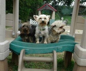 Villa de Perros - Small Dogs